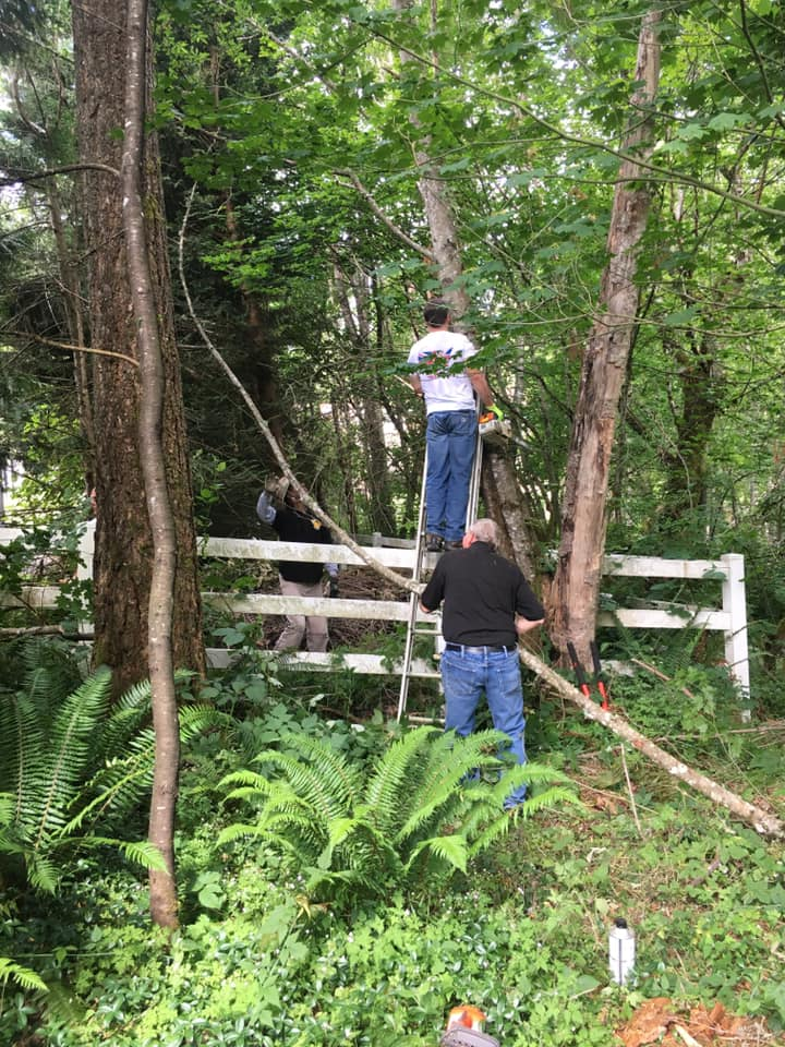 tree removers